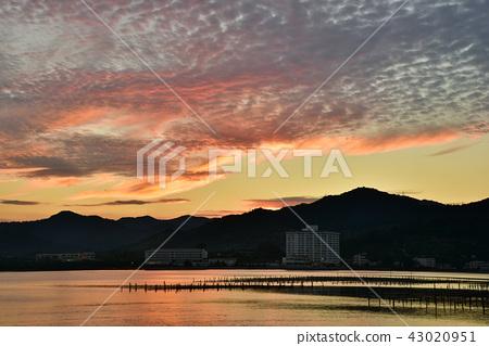Nagi Lake Sunset oyster shelf 43020951