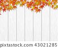 原木 楓樹 紅楓 43021285