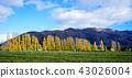 森林 树林 天空 43026004