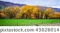 森林 树林 树木 43026014