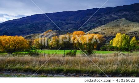 Autumn scenery of New Zealand 43026022