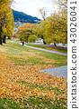 公园 树木 树 43026041