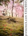 Kyoto Prefecture Seongnam-myeon plum 43028605