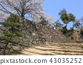 National treasure Hikone Castle and cherry blossoms in full bloom 43035252