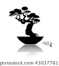 Vector of Bonsai tree. Japanese and Chinese trees. 43037761