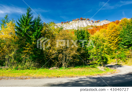 road though forest in to the mountain 43040727