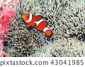 fish, fishes, tropical fish 43041985