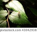 刺 多刺的 荊棘 43042938