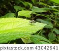 虫子 漏洞 昆虫 43042941