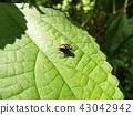 虫子 漏洞 昆虫 43042942