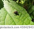 虫子 漏洞 昆虫 43042943