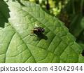 虫子 漏洞 昆虫 43042944