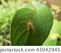 虫子 漏洞 昆虫 43042945