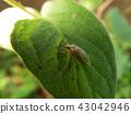 蟲子 漏洞 昆蟲 43042946