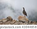 大天井岳에 나타난 천둥새 43044858