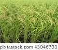 green, green color, verdure 43046733