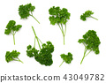 Leaves of Parsley Isolated on White Background 43049782