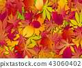 Autumn leaves, Autumn leaves, Autumn images, Autumn traces, Fallen autumn leaves, Stacked maple leaves 43060402