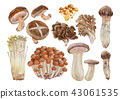 Autumn mushroom watercolor illustration 43061535