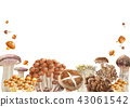 Background Autumn mushroom watercolor illustration 43061542