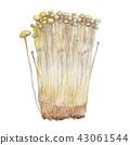 japanese hackberry, mushroom, aquarelle 43061544