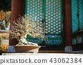 송광사, 절, 사찰 43062384