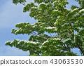 나무 : 야마 층층 나무과 합병 기념 見沼 공원 43063530