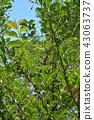 Tree: Egonoki Ekonoki Merger Memorial Minuma Park 43063737