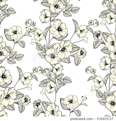 抽象的無縫菊花花卉集合 43065537