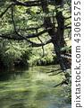 奧日光 湯川 散步 43065575