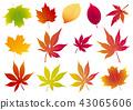Maple leaf illustration, Maple leaves, Autumn image, Fall leaves, Fall leaves 43065606