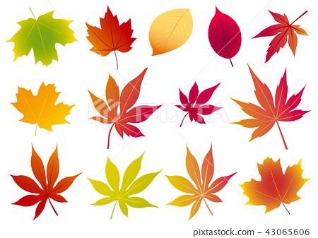 楓葉例證,槭樹離開,秋天圖像,秋天葉子,秋天葉子 43065606