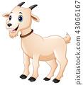 น่ารัก,สัตว์,สัตว์ต่างๆ 43066167