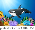 Cute killer whale under water 43066351