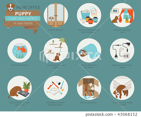 Puppy care and safety in your home. Home office 43068152
