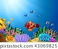 动物 水生的 珊瑚 43069825