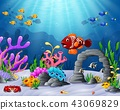 Tropical fish with beautiful underwater world 43069829