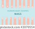 Human body shapes. Hand finger nail types set 43070554
