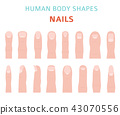 Human body shapes. Hand finger nail types set 43070556