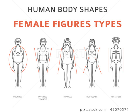 Human body shapes. Female figures types 43070574
