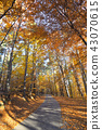 Colorful autumn landscape in mountain 43070615