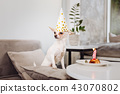 Funny little dog standing near the table with birthday cake 43070802