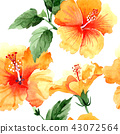 floral flower plant 43072564