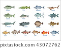 River Fish Identification Slate With Names 43072762