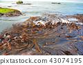 다시마, 해안, 바닷가 43074195