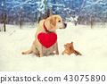 dog labrador cat 43075890