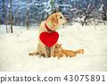 dog, cat, snow 43075891