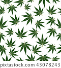 Marijuana or cannabis leafs seamless pattern 43078243