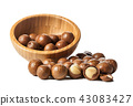 Close up of Macadamia Nuts 43083427