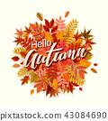 秋天 秋 树叶 43084690